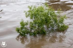 20130603_31024_Hochwasser_Saale_Wasserzeichen
