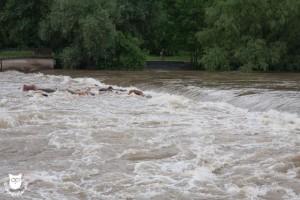 20130603_31057_Hochwasser_Paradieswehr_Wasserzeichen
